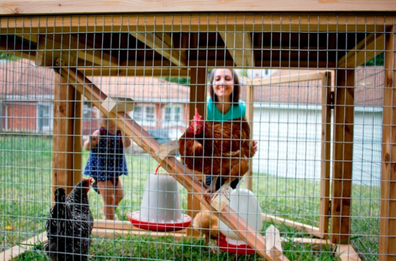 family with backyard coop