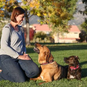 Julie Hart - choosing a rescue dog