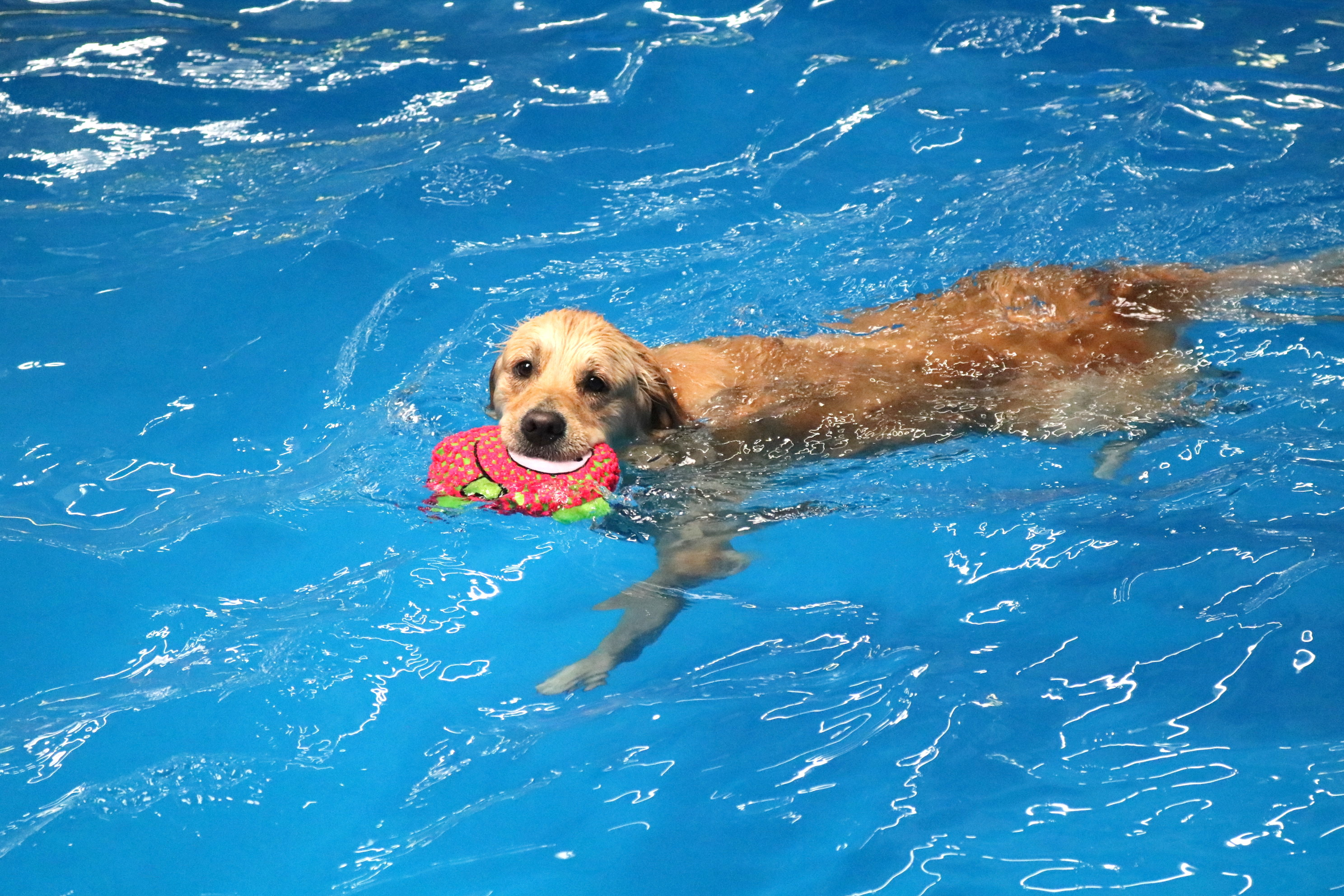 Animal Hydrotherapy